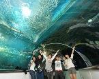 新潟関屋自動車学校 合宿免許 マリンピア日本海