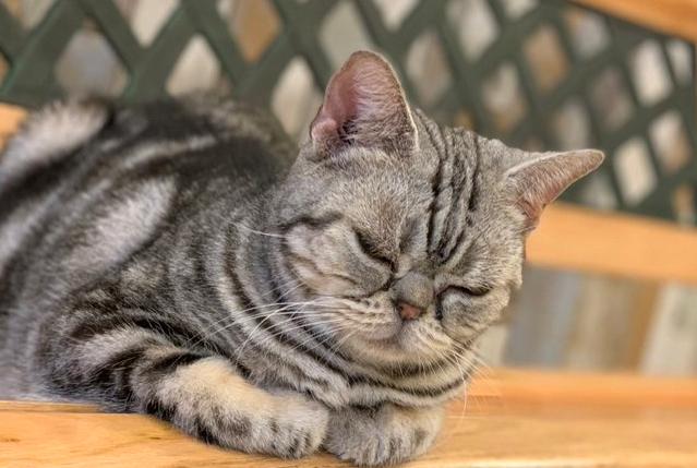 湯本自動車学校 特典 猫 猫カフェ