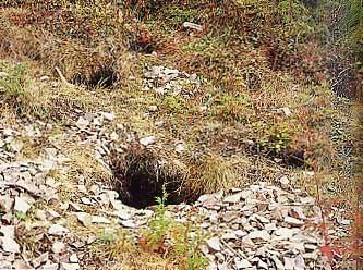 ジャガラモガラ風穴植物群落